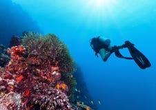 Jonge vrouwenscuba-duiker die koraalrif onderzoeken stock foto