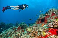 Jonge vrouwenscuba-duiker die overzeese bodem onderzoeken royalty-vrije stock fotografie