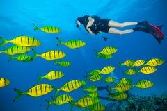 Jonge vrouwenscuba-duiker die overzeese bodem onderzoeken stock foto's