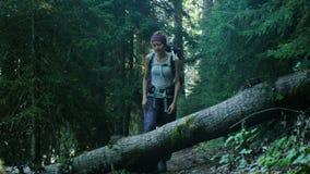 Jonge vrouwentoerist met een rugzakstappen over een gevallen boom in het bos en het glimlachen stock footage