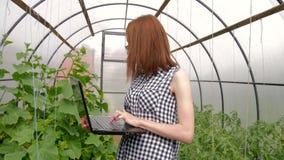 Jonge vrouwentuinman die met installaties in serre werken Een meisje die laptop, controles met behulp van hoe de tomaten en de ko stock video