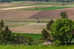 Jonge wijngaarden Royalty-vrije Stock Afbeelding