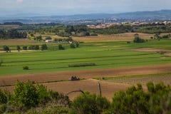 Jonge wijngaarden Stock Afbeeldingen