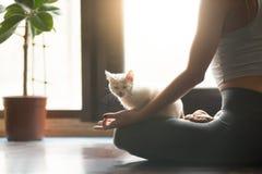 Jonge yogivrouw die met kattenhuisdier mediteren, huis binnenlandse backgrou royalty-vrije stock fotografie