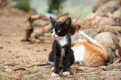 Jonge zwart-witte kat die in aard situeren Stock Foto