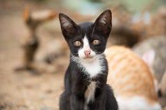 Jonge zwart-witte kat met onduidelijk beeldachtergrond Royalty-vrije Stock Fotografie