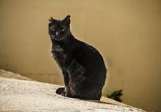 Jonge zwarte kattenzitting in de zon, die de camera, met één afgesneden jaar bekijkt royalty-vrije stock fotografie