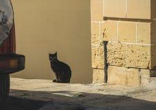 Jonge zwarte kattenzitting in de zon, die de camera, met één afgesneden jaar bekijkt royalty-vrije stock afbeelding