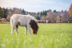 Jongelui weinig leuk paard in een landbouwbedrijf met groene grasachtergrond in royalty-vrije stock foto's