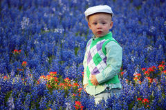 Jongen in Bluebonnets Stock Foto