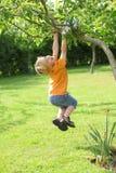 Jongen in de tuin Stock Foto's
