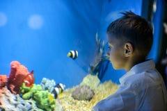 Jongen die in aquarium kijken stock foto's