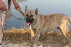 Jongen die de leiband van zijn hond houden royalty-vrije stock fotografie
