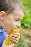 Jongen die graan eet Royalty-vrije Stock Foto's