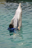Jongen die met Dolfijn Bottlenose zwemt Stock Afbeelding