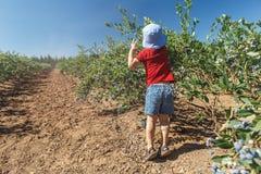 Jongen die verse bosbessen op een landbouwbedrijf plukken stock fotografie