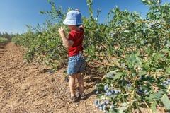 Jongen die verse bosbessen op een landbouwbedrijf plukken royalty-vrije stock afbeeldingen