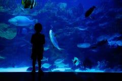 Jongen die vissen in aquarium bekijkt Stock Foto's