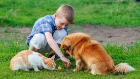 Jongen in een plaidoverhemd die de kat en de hond in de werf voeden stock afbeelding