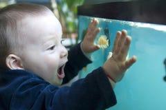 Jongen en aquarium Stock Foto