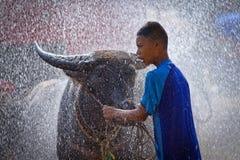 Jongen en buffels in waterplons Stock Afbeeldingen