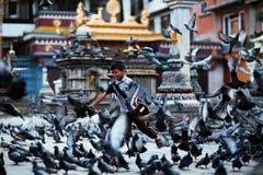 Jongen en duiven Stock Afbeelding