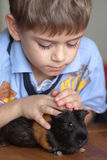 Jongen en proefkonijn stock foto's