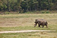 Jongen en zijn olifant. Royalty-vrije Stock Foto's