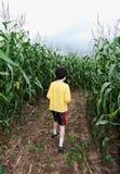 Jongen in graanlabyrint stock fotografie
