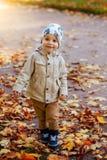 Jongen in het park in de herfst Stock Afbeeldingen