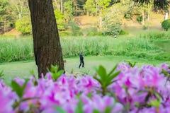 Jongen het praktizeren sport op groen gras stock afbeelding