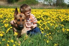 Jongen, hond en gele weide. Stock Afbeeldingen