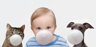 Jongen, hond en kat met kauwgom Royalty-vrije Stock Afbeelding