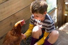 Jongen (7 jaar) de gekleed in gestreept overhemd en gumboots tikt kip, Royalty-vrije Stock Foto