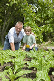 Jongen met Grootvader het Tuinieren Stock Fotografie