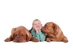 Jongen met honden Stock Afbeelding