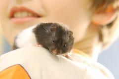 Jongen met zijn hamster royalty-vrije stock afbeeldingen