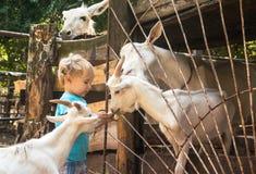 Jongen in milieu van witte geiten op landbouwbedrijf royalty-vrije stock fotografie