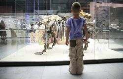 Jongen in museum Royalty-vrije Stock Foto's