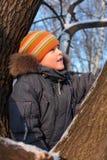 Jongen op boom in hout Royalty-vrije Stock Foto