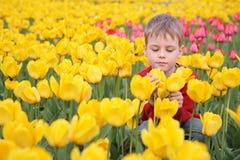 Jongen op gebied van tulpen stock foto