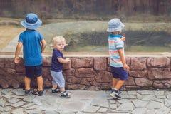 Jongens die op reptielen in terrarium letten stock foto's