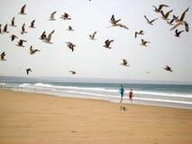 Jongens die vogels achtervolgen Stock Afbeeldingen