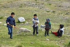 Jongens met kleine sheeps, Peru Stock Fotografie