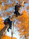 Jongens op de boom Stock Foto's