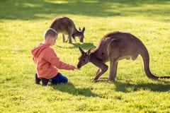 Jongens voedende kangoeroe stock fotografie