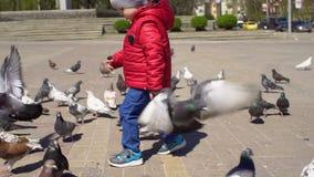 Jongensspelen met duiven in Zonnige dag in het Park stock footage