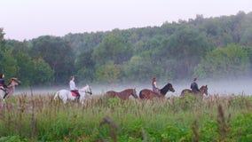 Jongeren die op horseback op de achtergrond van mooie aard, bos, mist lopen stock video