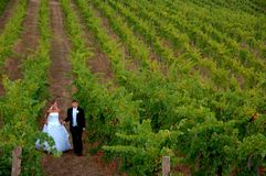 Jonggehuwden in een wijngaard royalty-vrije stock fotografie