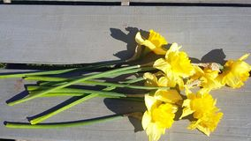 01 jonquil Obrazy Royalty Free